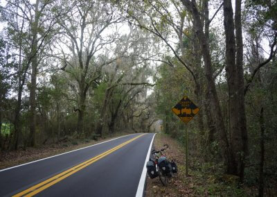 a-low-canopy-road-florida