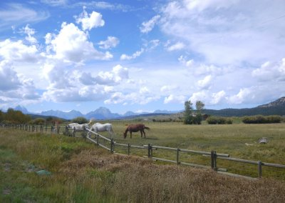 horses-in-front-of-the-grand-tetons-wyoming
